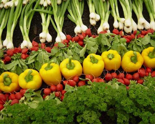 تاثیر سردخانه بر میوه و سبزیجات تغذیه سالم